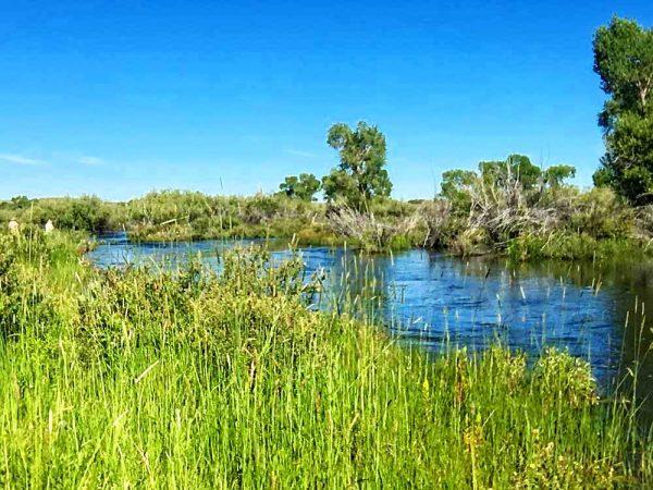 Faler Creek