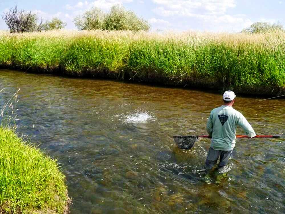 Faler Creek Fish