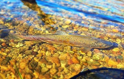 River Rock Brown